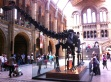Dino at the Natural History Museum, London